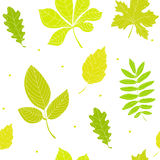 Summer pattern with color leaves. Ornament for textile and wrapping. Vector Royalty Free Stock Photos