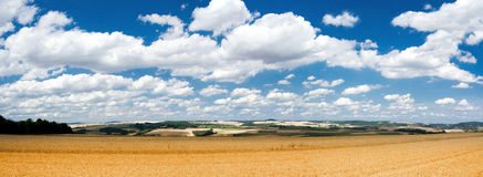 Summer peaceful scenery with rye fields. Summer peaceful scenery with rye field Stock Photos