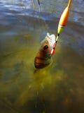 Summer perch fishing bait Royalty Free Stock Photo