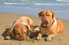 Summer pet vacation Stock Images