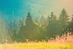 Summer Photo Background Royalty Free Stock Images