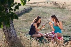 Summer picnic Royalty Free Stock Image