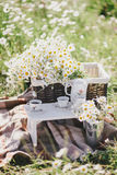 Summer picnic in a chamomile field on a sunny day Royalty Free Stock Image