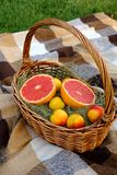 Summer picnic. Grapefruit and apricots in the fruit basket royalty free stock photo