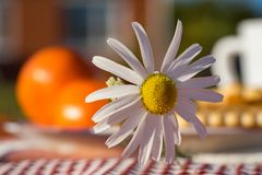 Summer picnic on the grass. Summer holiday. Sunny day Royalty Free Stock Image