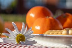 Summer picnic on the grass. Summer holiday. Sunny day. Oranges are out of focus Royalty Free Stock Photos