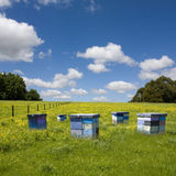 Summer picturesque field and beehives Stock Image