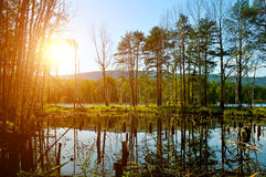 Summer picturesque landscape - mixed forest at the Saint Vera Island in Turgoyak lake, Southern Urals, Russia. Royalty Free Stock Images