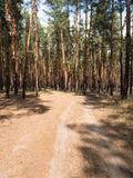 Summer pine forest on bright Sunny day. Unpaved, sandy road through the tall pines. Shadows from the bright midday sun. Royalty Free Stock Images