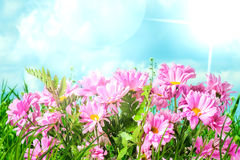 Spring pink flowers royalty free stock images