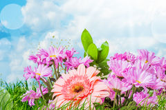 Summer pink flowers stock photo