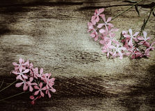 Summer pink flowers on vintage wooden background Stock Photos