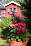 Summer place. Flowers in fornt of a summerplace (house Stock Photo