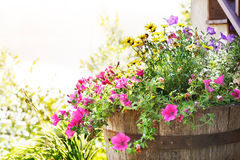 Summer planter. Wooden tub planter spilling over with summer blossoms stock image
