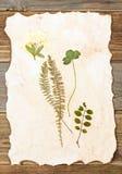 Summer plants herbarium stock images