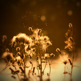 Summer pollen Royalty Free Stock Images