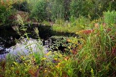 Summer Pond Stock Image