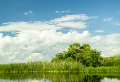 Summer pond in the background of sky and trees Royalty Free Stock Photo