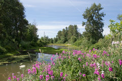 Summer pond in Eugene Oregon with pink wildflowers Stock Photos