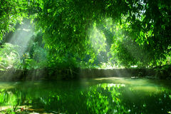 Summer pond Royalty Free Stock Photography