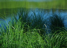 Summer pond. In Sourt Bohemia royalty free stock photo