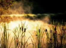 A summer pond steams with sun and fog. Morning is a great time to enjoy the silence of nature Stock Images