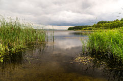 Summer pond with vegetation and a cane Stock Photography