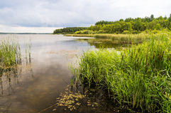 Summer pond with vegetation and a cane Royalty Free Stock Images