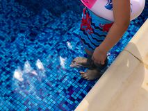 Summer pool party. In a clear water swimming pool stock image