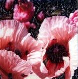 Summer Poppies. Polaroid manipulation of pink oriental poppies stock illustration