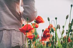Summer poppy flowers field with girl standing from backside. Outdoors horizontal image with vintage filter stock photography