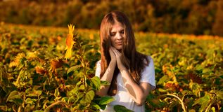 Summer portrait of happy young woman in hat with long hair in sunflower field stock photos