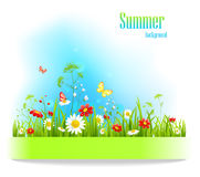 Summer positive floral background Royalty Free Stock Image