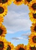 Summer postcard. Summer card - blue sky with full border of sunflowers Stock Image