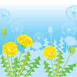 Summer Postcard from dandelions Stock Images