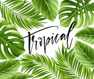Free Summer Poster With Tropical Palm Leaf And Handwriting Lettering. Vector Illustration Royalty Free Stock Image - 91162916
