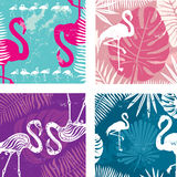 Summer posters set with flamingo Stock Photos
