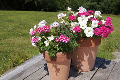 Summer potted plants Royalty Free Stock Photos