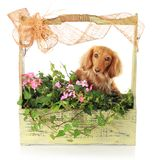 Summer puppy Royalty Free Stock Images
