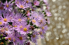 Summer Purple Flowers. With water reflection. Great for use as a background Stock Images