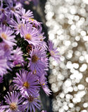 Summer Purple Flowers. With water reflection. Great for use as a background Royalty Free Stock Photo