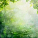 Summer rain. Stock Images
