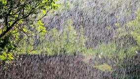 Summer Rain stock footage
