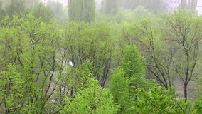 Summer rain. The rain in the summer stock footage