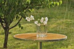 Summer rain and Carpathian bells Royalty Free Stock Images