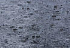Summer rain. Drops of a summer rain on asphalt stock photo