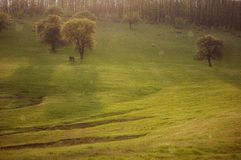 Summer rain falling falling over a landscape. With wild horses and green trees Royalty Free Stock Photo