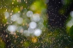 Summer rain falling over a natural blurred background of green leaves and soft focus bokeh lights. Natural defocused green. Background perfect for creative stock photos