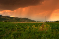Summer rain fields Stock Photography