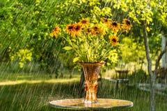Summer rain and flowers of echinacea Stock Photo